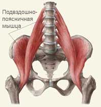 Пояснично-подвздошная мышца