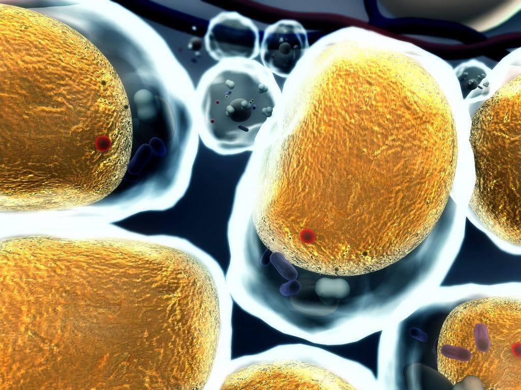 жировая клетка