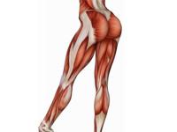 Лучшие упражнения на заднюю поверхность бедра