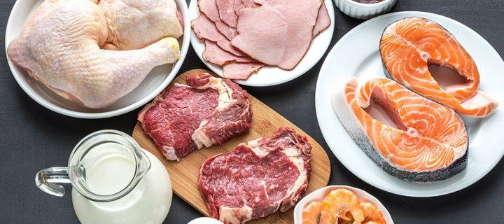 Вредно ли есть много белка?