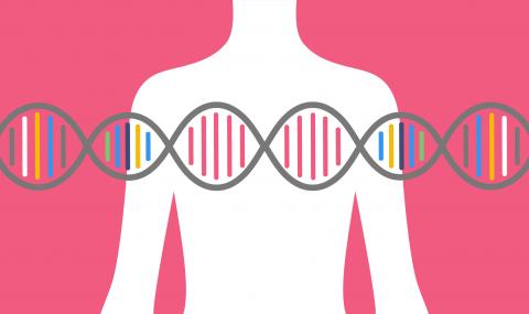 Питание и тренировки по ДНК-тестам